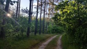 Midsommar walk